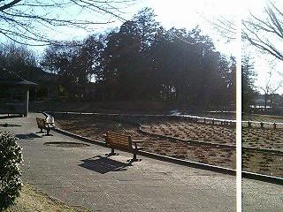 観桜園内菖蒲園冬