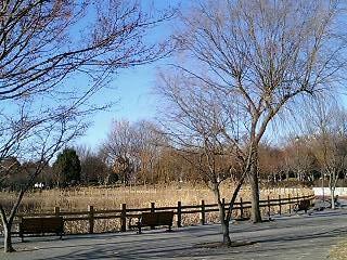 観桜園内池冬